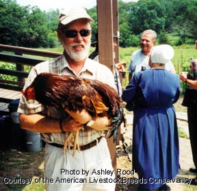 American Livestock Breeds Conservancy: BUCKEYE Chicken